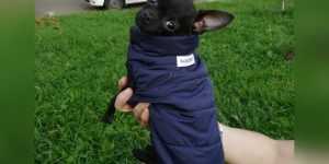 Abrigo para chihuahua calentito photo review