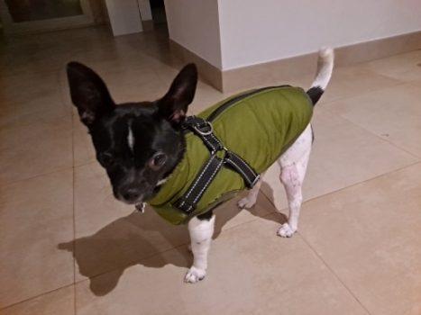 Abrigo impermeable para perros pequeños photo review